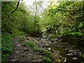 NY9039 : Footpath by Middlehope Burn by Andrew Curtis