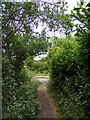 TM2956 : Little Lane Bridleway to the B1078 Border Cot Lane by Adrian Cable