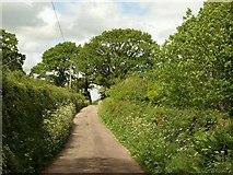 SS7811 : Curriton Lane by Derek Harper