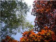 TL7604 : Tree colours by Lewis Potter