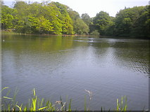 TL7604 : Danbury lake: middle by Lewis Potter