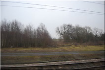 SE4081 : Scrubland by the ECML north of Thirsk Station by N Chadwick