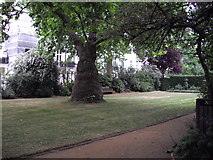 TQ2878 : Gardens in Chester Square, London by John Lord