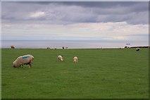 NZ7814 : Pasture, Newton Bank by Mick Garratt
