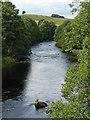 NY7287 : River North Tyne near Falstone (2) by Stephen Richards