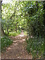 TM2446 : Footpath to Martlesham Heath by Adrian Cable