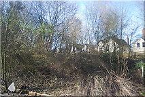TQ5838 : Overgrown railway line by N Chadwick