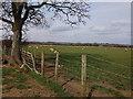 SO9742 : Sheep in field near Hall Farm, Bricklehampton by John Brightley