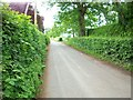 SJ4369 : Salter's Lane, Picton Gorse by Jeff Buck