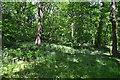SK3281 : Ecclesall Wood by Ashley Dace