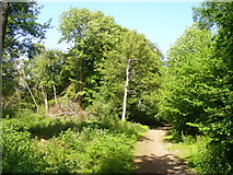 TQ1450 : Bridleway in Dorking Wood by Colin Smith
