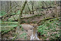 TQ0931 : Woodland stream and river cliff, Tittlesfold Copse by N Chadwick