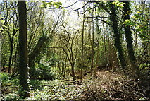 TQ4251 : Tenchley Wood, Limpsfield Common by N Chadwick