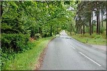 SJ9715 : Looking Up Pottal Slade Road. by Mick Malpass