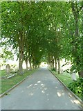SU5707 : Wickham Road Cemetery (18) by Basher Eyre