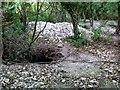 SY7498 : Badger sett by Nigel Mykura