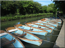 SU7451 : Rowing boats for hire by Sandy B