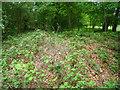 SU5836 : Overgrown tumuli - Spy Bush plantation by Given Up