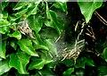 SY7698 : Caterpillars by Nigel Mykura