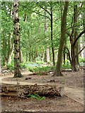SE2741 : Adel Dam Nature Reserve by Oliver Dixon