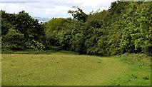 J4681 : Field and trees, Crawfordsburn Country Park (5) by Albert Bridge