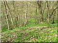 NZ5808 : Woodland near Battersby by Maigheach-gheal