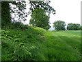ST8428 : Bracken, Lower Park Farm by Maigheach-gheal