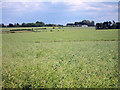 TR0253 : Crop fields off Shottenden Lane by Oast House Archive
