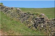 SW9680 : Cornish hedge near Port Quin by Derek Harper