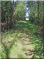 SO8942 : Path through woodland on Brierley Hill by Trevor Rickard