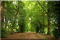 SP5705 : Tree lined bridleway to Shotover House by Steve Daniels