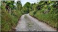 J3048 : Darby's Loanin near Dromara (5) by Albert Bridge