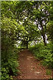 SP5606 : Trail in Shotover Country Park by Steve Daniels