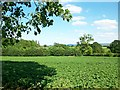 SJ4257 : View towards Beeston Castle by Jeff Buck