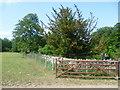 TF0703 : Plantation viewed from the Hereward Way by Marathon