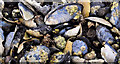 J3683 : Mussel shells, Jordanstown by Albert Bridge