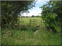 SK8354 : Stile on the footpath from Barnby to Coddington by Jonathan Thacker