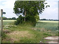 TM2365 : Footpath to Bedfield Hall by Adrian Cable