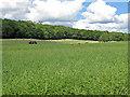 SE7385 : Farmers at work near Sinnington by Pauline E