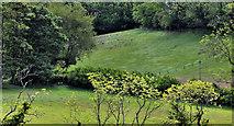 J4681 : Fields and trees, Crawfordsburn/Helen's Bay by Albert Bridge