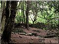 SJ8955 : Tree dressing by Jonathan Kington