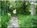SO3383 : The path up to Bury Ditches hillfort by Jeremy Bolwell