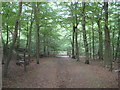TQ1492 : Harrow Weald Common by Nigel Cox