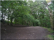 SE2237 : Track - Swaine Wood - Broadway by Betty Longbottom