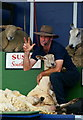 TQ3429 : The Sheep Show (5) by Peter Trimming