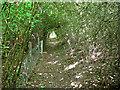 TL4959 : Permissive path near Fen Ditton by John Sutton