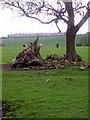 NZ1620 : Grazing land near Ingleton Grange by Maigheach-gheal
