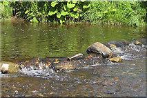 SE7485 : Mini rapids, River Seven by Pauline E