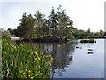 SJ9599 : The Upper Lake, Stamford Park by David Dixon