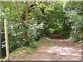 TM2763 : Earl Soham Lane Bridleway by Adrian Cable
